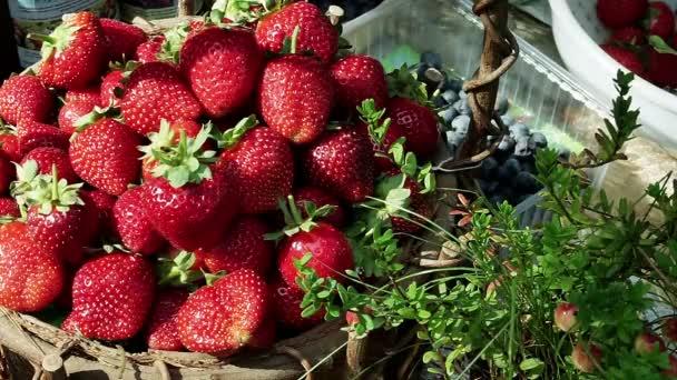 Still life. Šťavnaté zářivě červené jahody v košíku