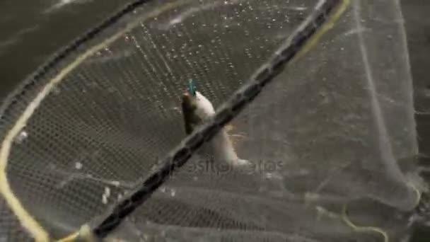 A halász, amivel az édesvízi halat a folyóból kifogott rúd segítségével a halászháló. HD