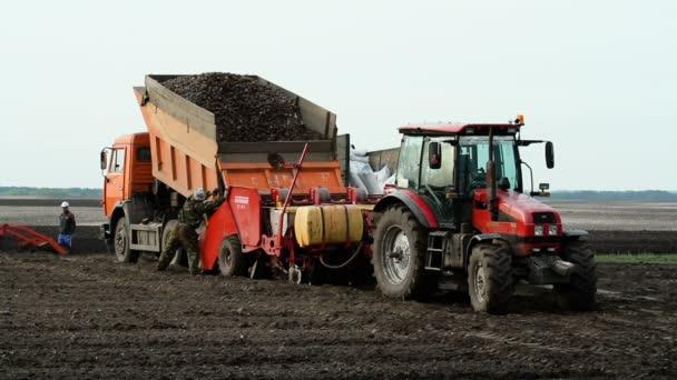 Výsadba brambor. Proces vykládky brambory z auta do člen určitý Secí stroj. Duben 2016. Rusko. HD