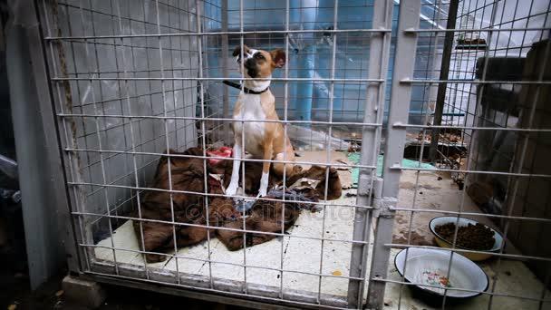Hajléktalan sima szőrű, fehér, vörös kutya egy állat menedék-ban rács mögé. HD