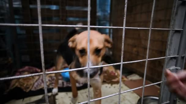 Homeless animals. A stray mongrel dog wagging his tail and licking a human hand through the cage. HD. HD