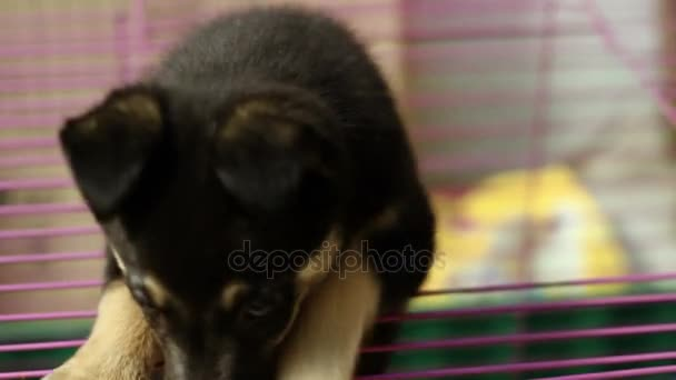 Homeless animals. Close-up shot of cute mongrel little puppy getting out from the cage in an animal shelter. HD