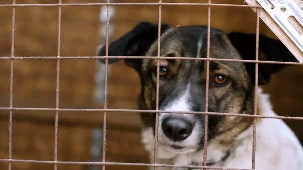 Homeless animals. Close-up shot of muzzle of cute mongrel dog behind the bars of an animal shelter. HD