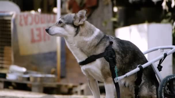 Hayvan Barınağı Kim Tekerlekli Hayvanlar Için Bir Güzel Küçük