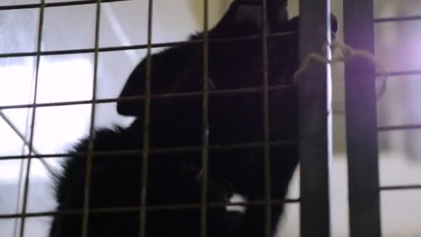 Homeless animals. Muzzle of mongrel dog behind the bars of an animal shelter. HD