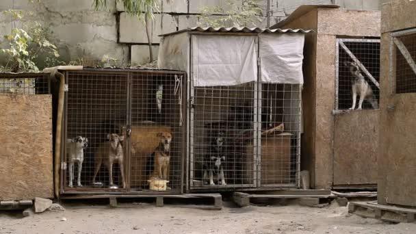 Heimatlose Tiere. Fünf Anlagen mit bellenden Hunden im Tierheim. HD