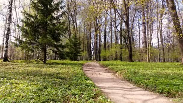 Lesní krajina. Lesní cesty v listnatých lesích. 4k