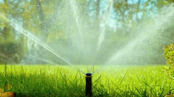 Letní krajina. Automatické zavlažování pro rostliny a trávník. Zpomalený pohyb. HD