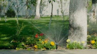 Impianto di irrigazione del prato il giardino in erba - Quando seminare erba giardino ...