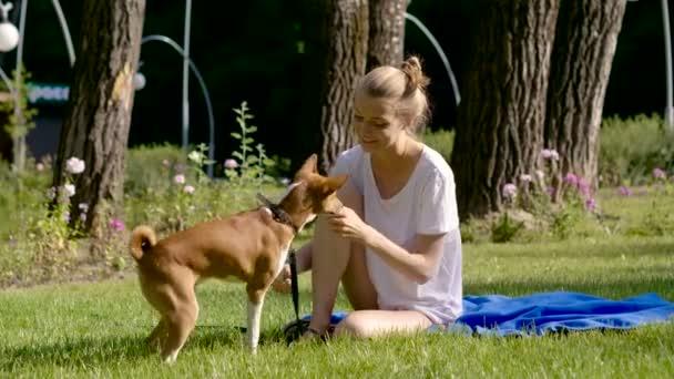 Haustiere. Hunderasse Basenji sitzen auf dem grünen Rasen und ein Pfötchen geben, zu seinem Besitzer. 4k