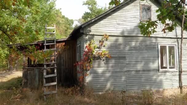 Külső kilátás vidéki otthon az erdőben. 4k