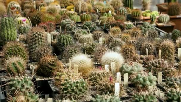Close up of various species of cactus. 4K