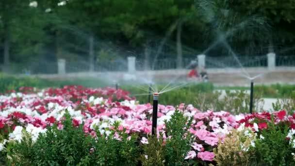 Zavlažovací zařízení. Postřikovač stříká kapky vody na zelenou trávu a rozkvetlé barevné květy v zahradě nebo ve veřejném parku v Madridu. Španělsko. 4K