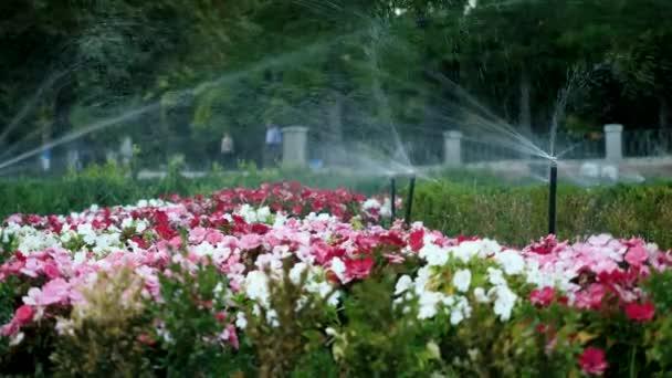 Zavlažování zahrady. Automatický zavlažovací systém pro rostliny, květiny a trávník. Madrid. Španělsko. 4K