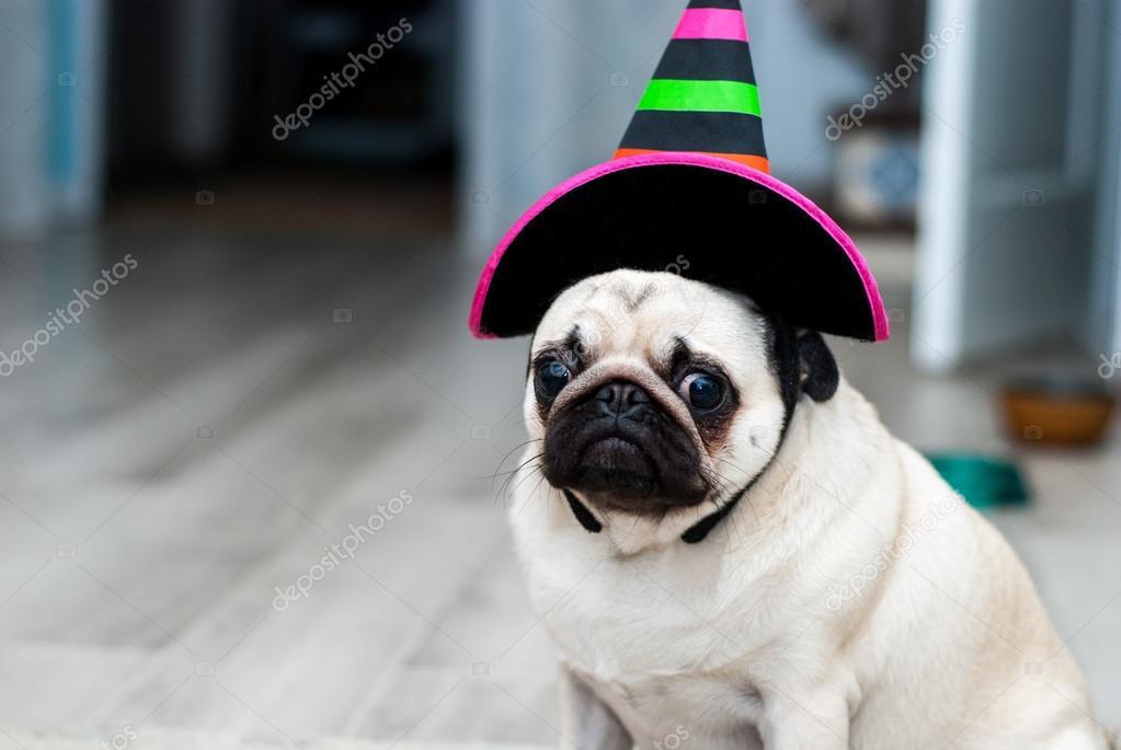 Unglucklich Mops Trauriger Geburtstag Hund Mit Hut Halloween Hund