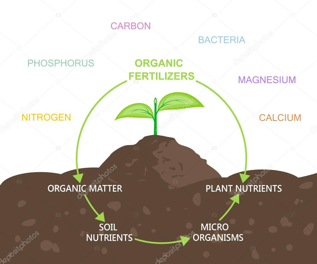 Diagram of Nutrients in Organic Fertilizers