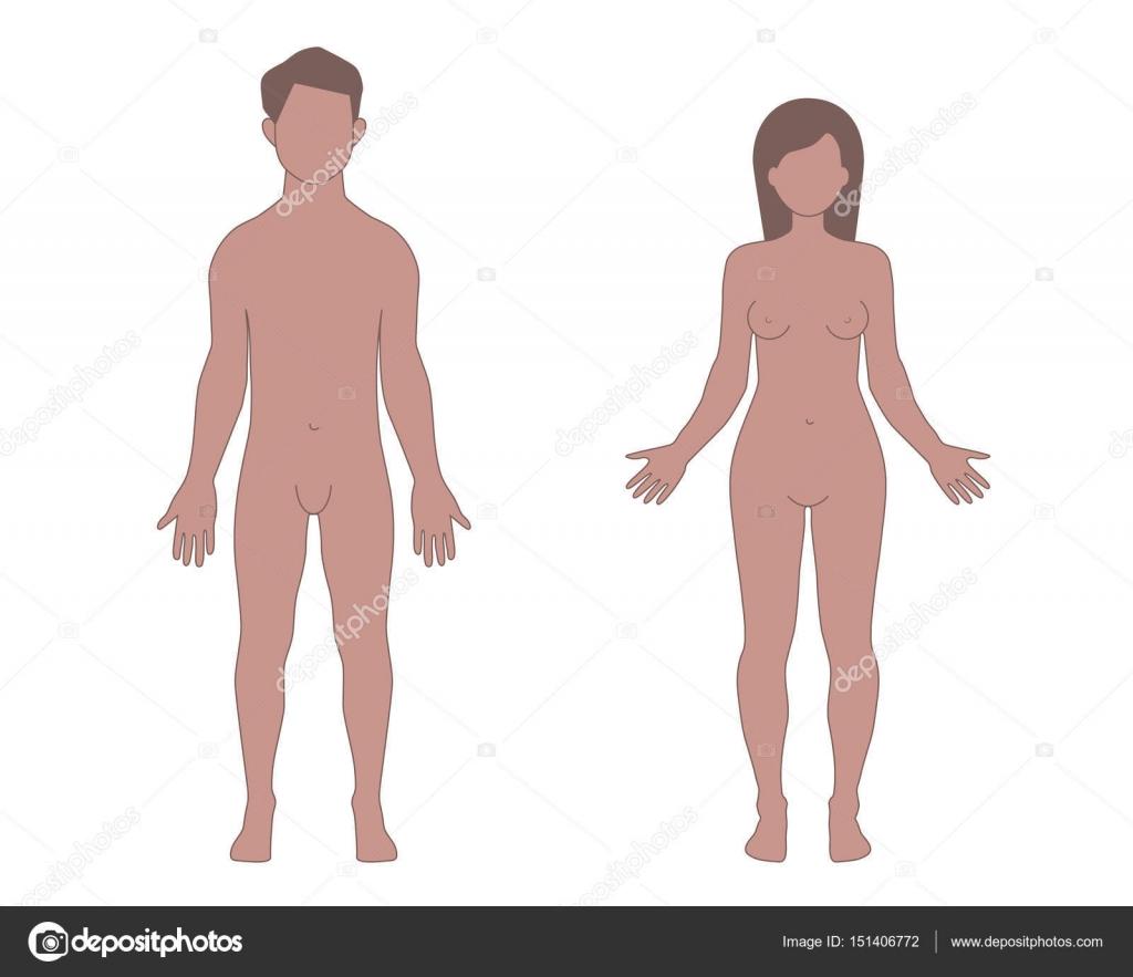 Diagrama Del Cuerpo Humano Femenino - Example Electrical Wiring ...