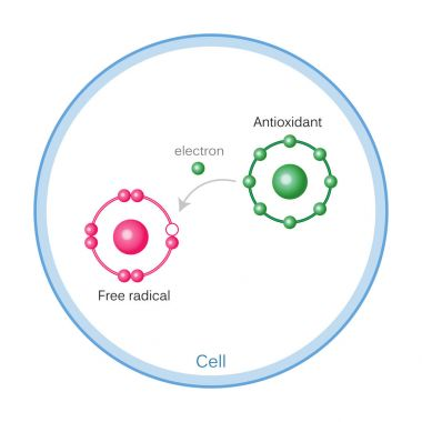 How Antioxidants Work On Free Radicals Damage