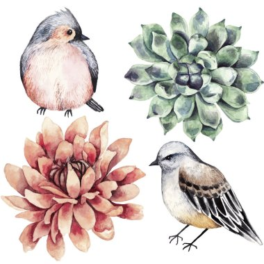 Collection flowers, bird, succulent, watercolor style.
