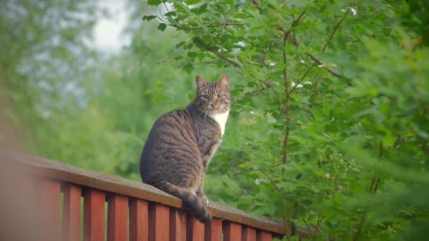 A szürke cirmos macska ül a magas kerítés és órák