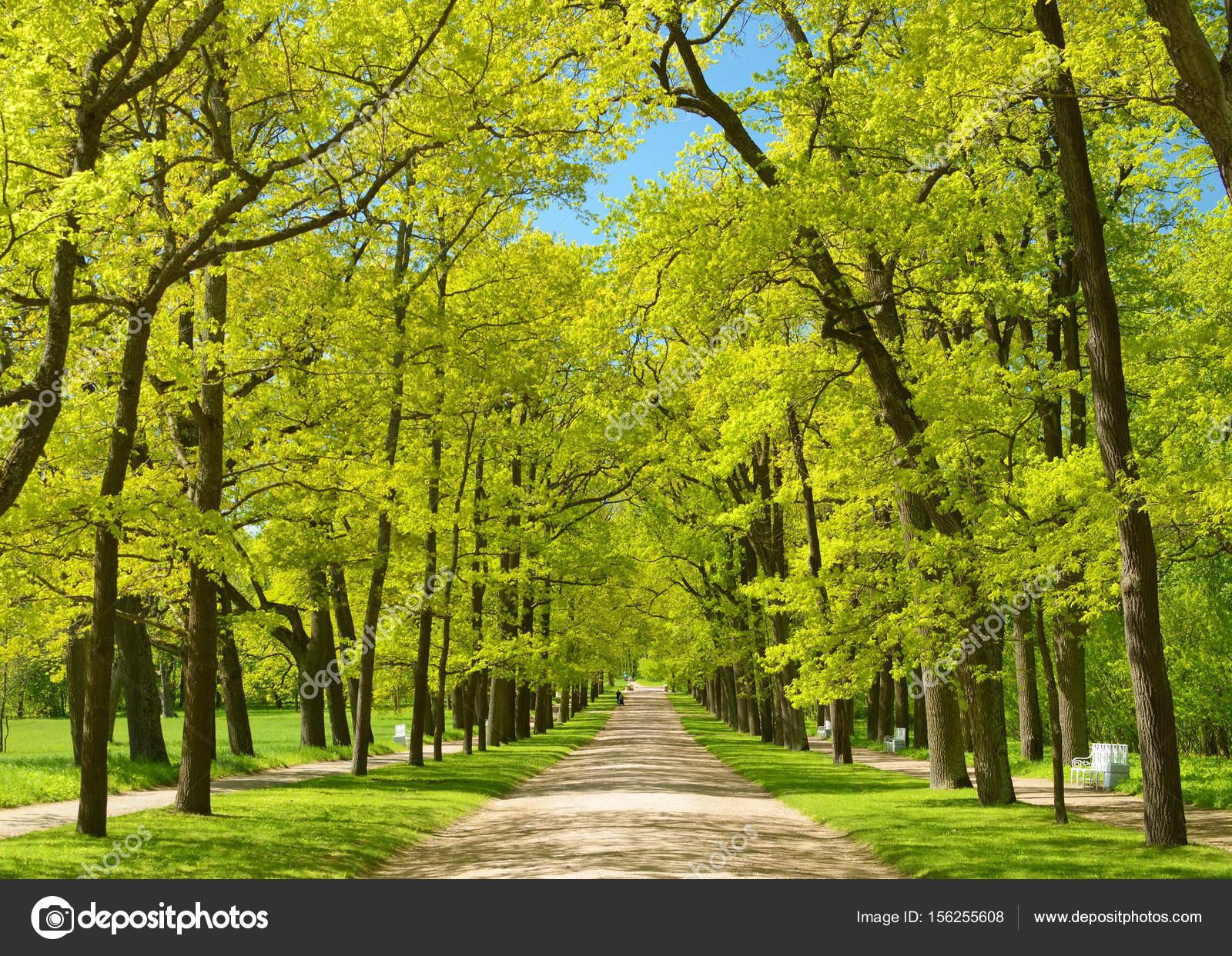 Imagenes De Paisajes De Primavera: El Paisaje Natural En La Primavera