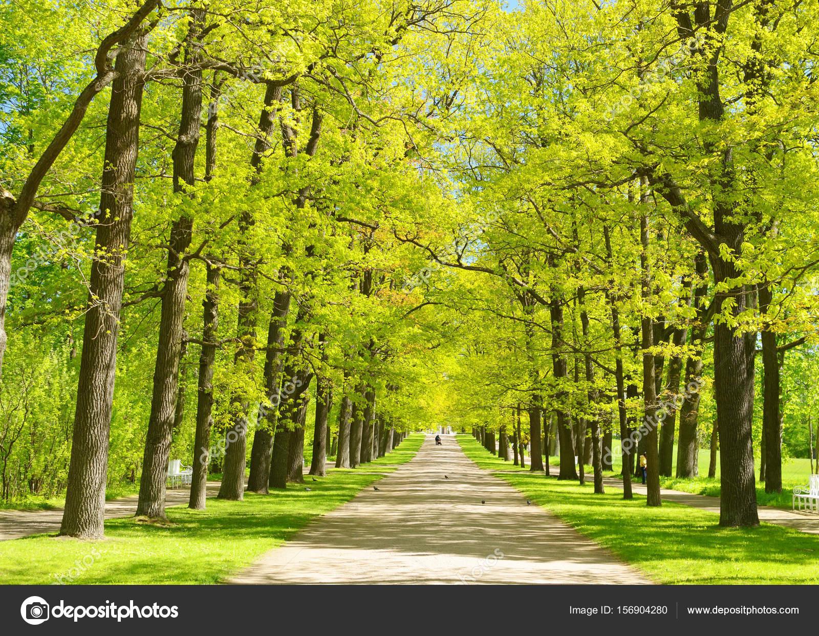 Favoritos A paisagem natural no verão — Fotografias de Stock © parasunak  SQ81