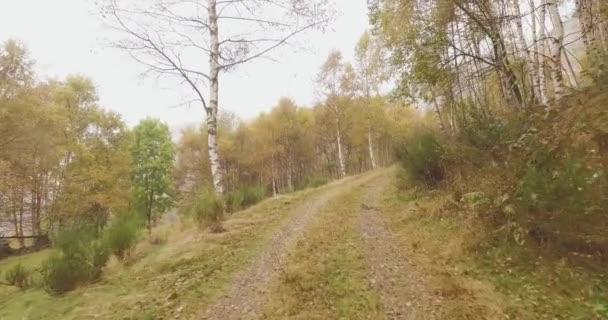 Séta a szabadtéri közelében Nyírfa út mentén erdő erdő rossz időjárás felhős nap. 4k Pov előre természet lövés