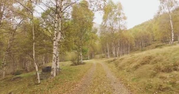 Pěší venkovní podél silnice u bříz v lese lesa s zatažené den špatné počasí. 4k Pov vpřed příroda zastřelil