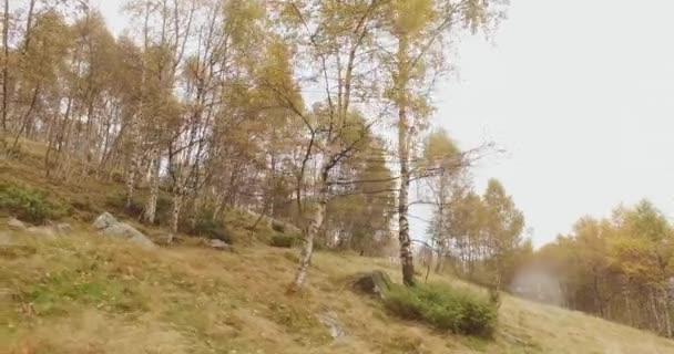 Pěší venkovní přes březové stromy v lese lesa s zatažené den špatné počasí. 4 k akční strana povahy shot