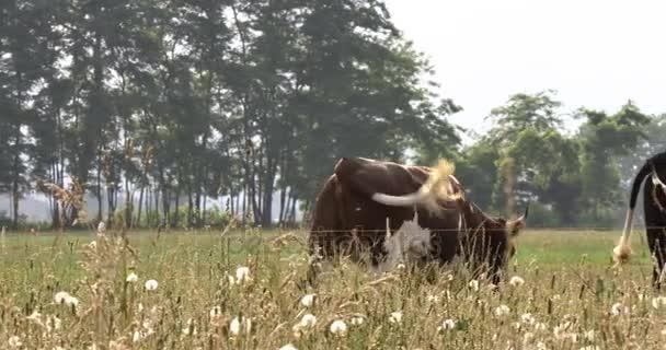 pascolo delle mucche al pascolo campo rurale fattoria in giorno pieno di sole
