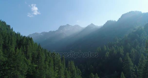 Přesun z boku do borového lesa