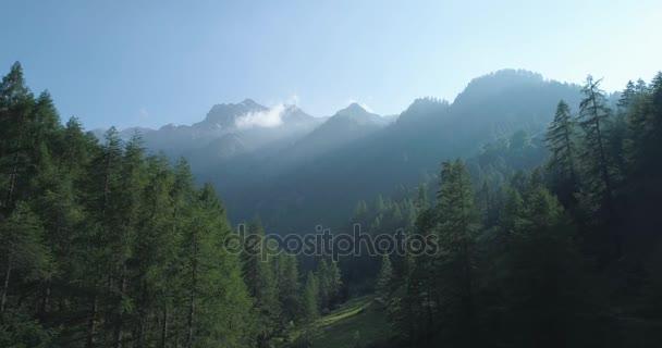 kupředu do borové lesy lesů a horských údolí sluneční erupce v letním dni. Evropa Itálie Alpy zelené přírody stvol hory divoké letecké establisher.4k hukot let založení shot