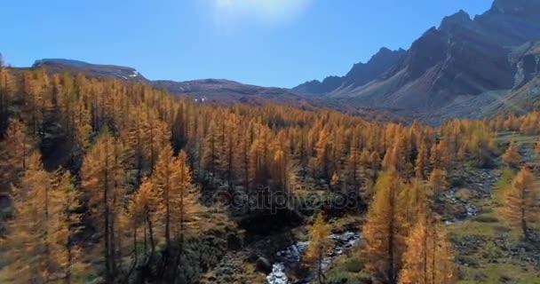 előre antenna feletti alpesi hegyi-völgy és a narancs vörösfenyő-erdő erdő napsütéses őszi. Alpok Európa kültéri színes természet tájkép hegyek vad establisher.4k drone repülés létrehozó lövés esik