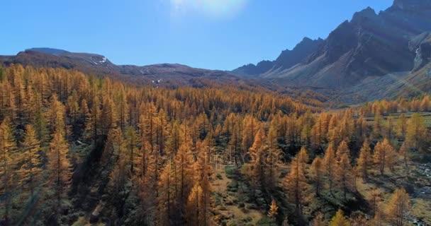 zpětně antény přes alpské horské údolí a oranžové modřín Les lesy slunečný podzim. Evropa venkovní barevné přírody stvol Alpách divoké spadají establisher.4k hukot let založení shot