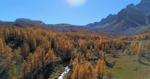 backward aerial over alpine mountain valley and orange larch forest woods in sunny autumn.Europe Alps outdoor colorful nature scape mountains wild fall establisher.4k drone flight establishing shot
