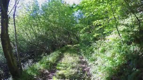 předávat pov v divokých lesích. pěší turistiku či Treking dobrodružství v lese zelené přírody venku s filtrování sluneční světlo v slunné letní day.4k hlediska video
