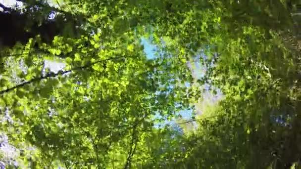 předávat pov v divoké lesy vyhledávání stromy a listy. pěší turistiku či Treking dobrodružství v lese zelené přírody venku s filtrování sluneční světlo v slunné letní day.4k hlediska video
