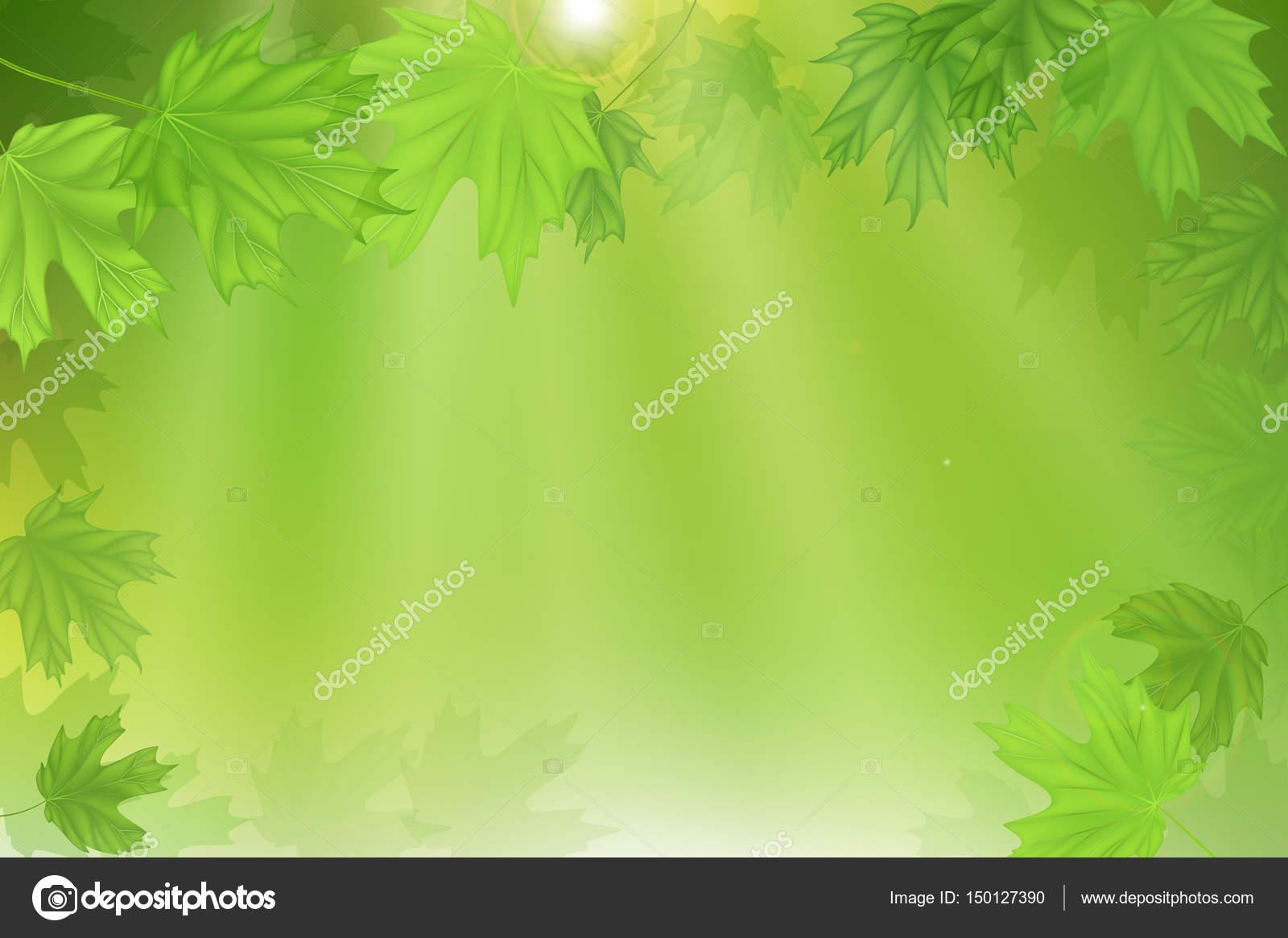 Hojas de color verde fresco bosque con rayos del sol. Primavera y ...