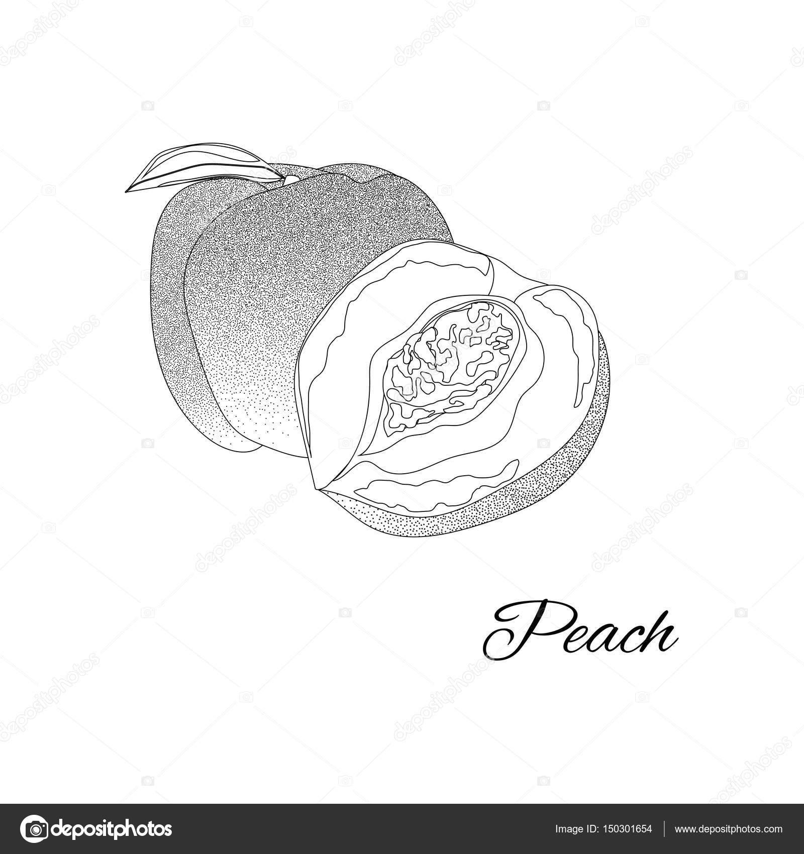 şeftali Sayfa Boyama Kitabı Için Doodle Tasarım Meyve Vektör