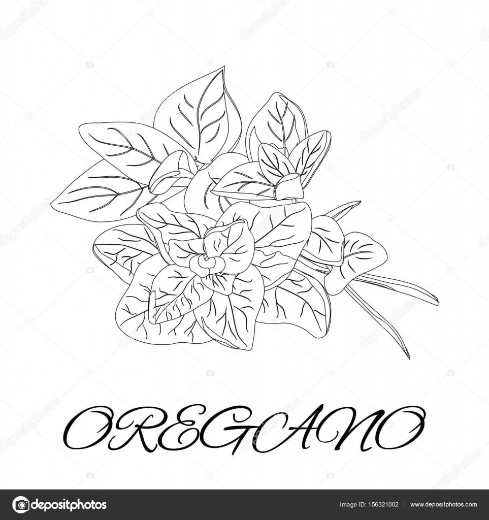 herbs coloring pages - photo#15