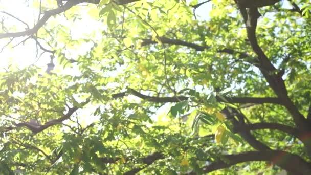 větve stromů v lese