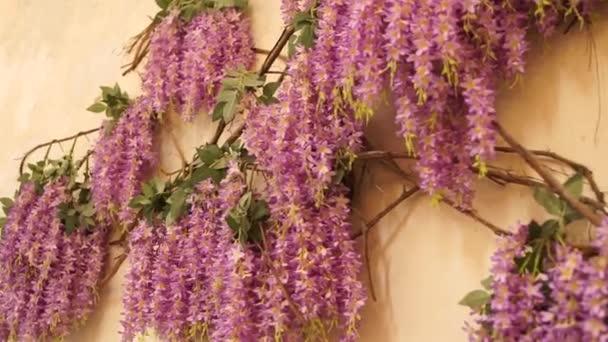 Fialové květiny na zeď