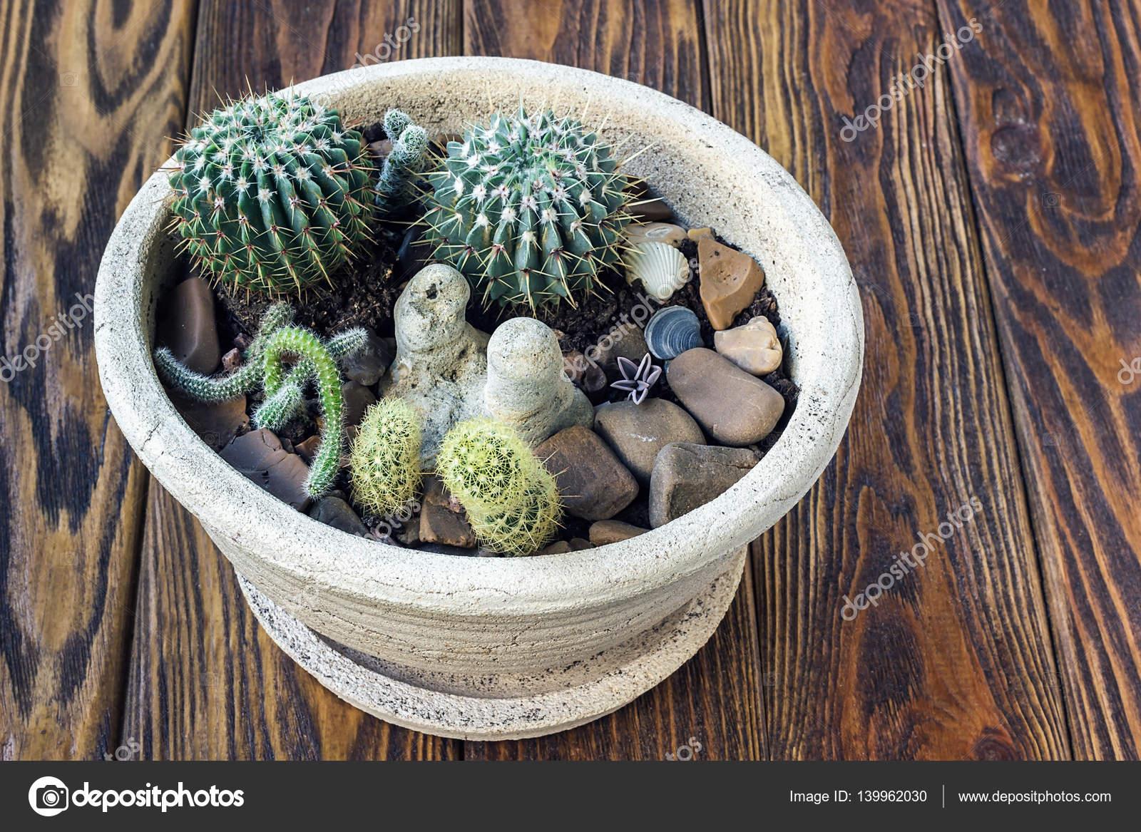 Bois De Cactus Petit Cactus Plantes Succulentes De Still Life