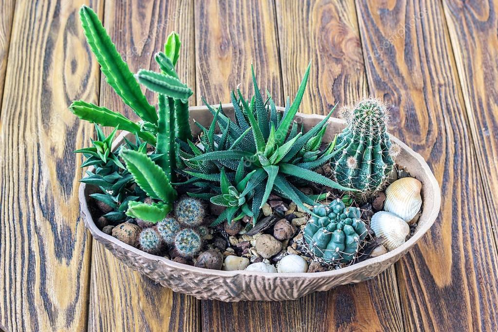 Bois de cactus petit cactus plantes succulentes de still life miniature jardin en pot sur une - Petit jardin en pot saint denis ...