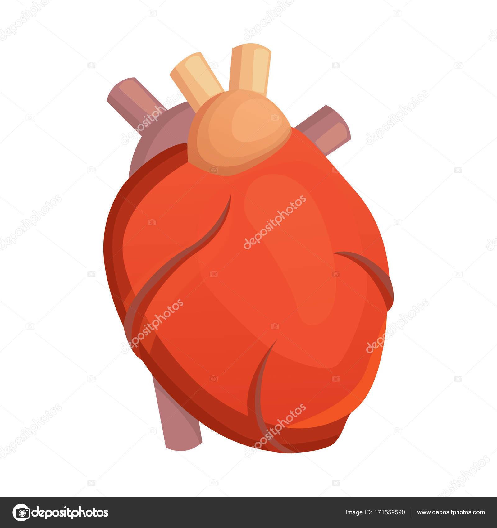 Corazón la ciencia médica vector ilustración plana. anatomía humana ...