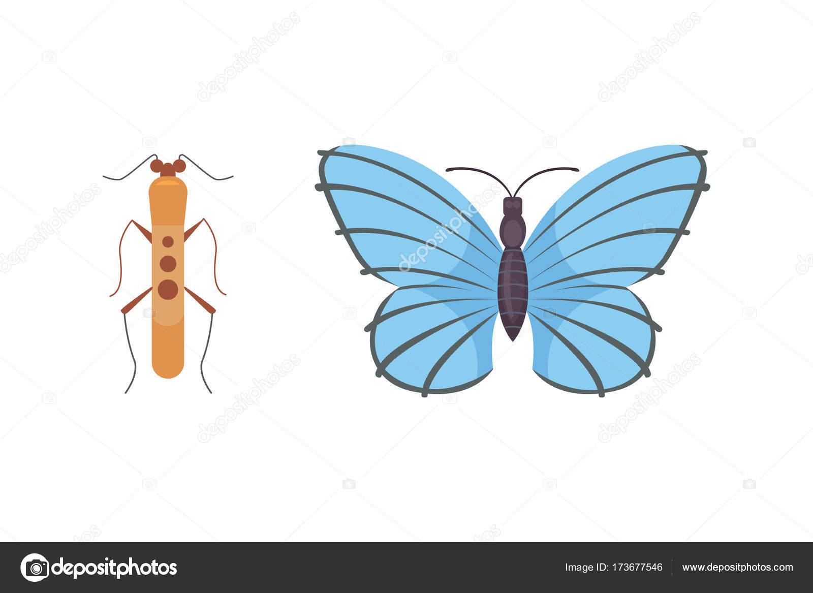 Dibujos Infantiles De Mariposas Y Libelulas Conjunto De