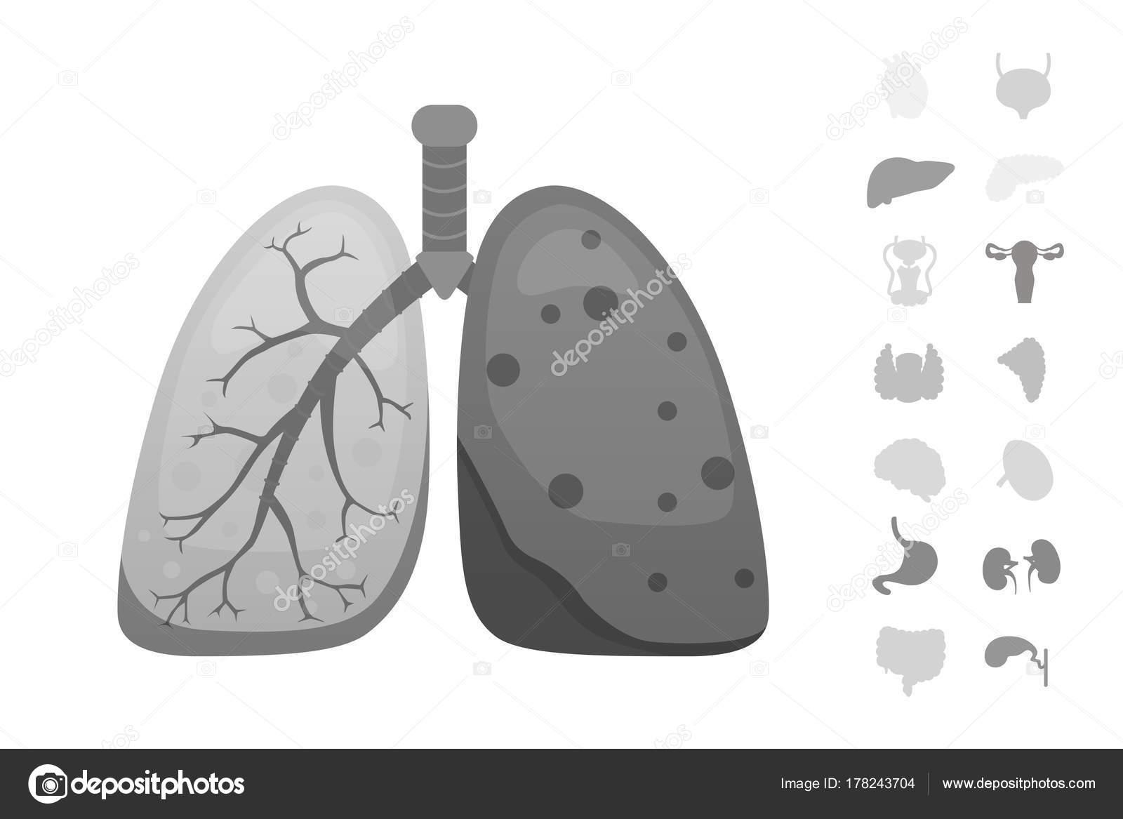 Cartoon-menschlichen Organen-Vektor-Set. Anatomie des Körpers ...