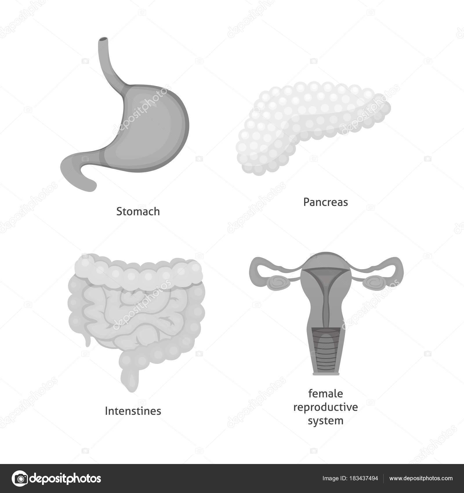 Cartoon human organs set. Anatomy of body. — Stock Vector ...