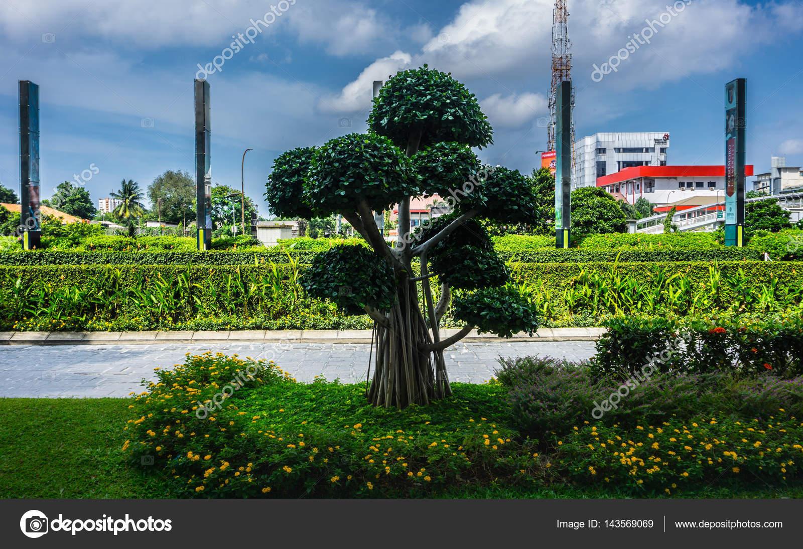 Park Als Tuin : Bonsai boom in een tuin in central park mall met blauwe bewolkte