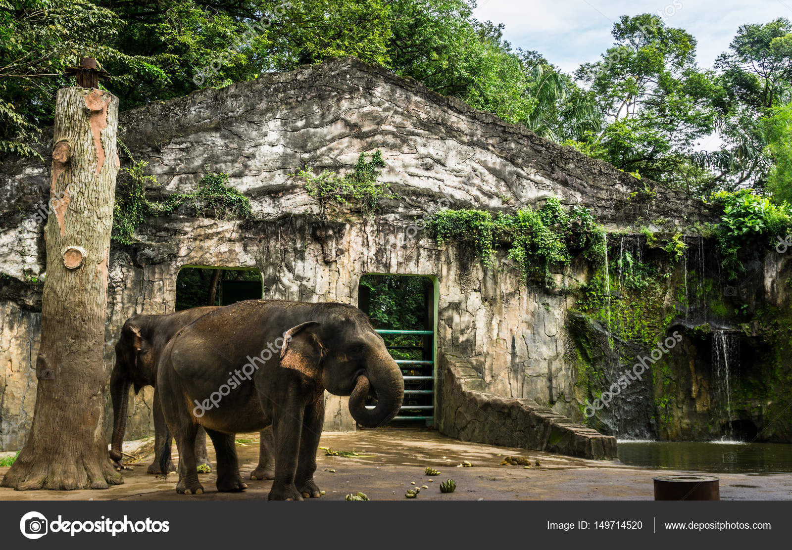Elephant And Banana On The Floor In The Cage Photo Taken In Ragunan